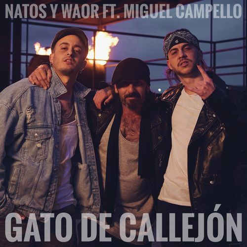 Medium_natos_waor_gato_de_callej_n