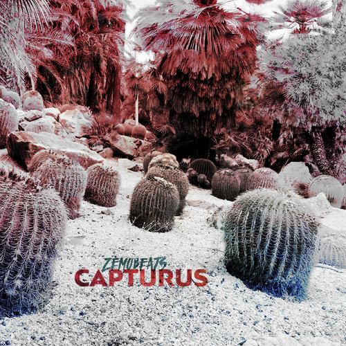 Medium_capturus