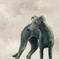 Small_galgo