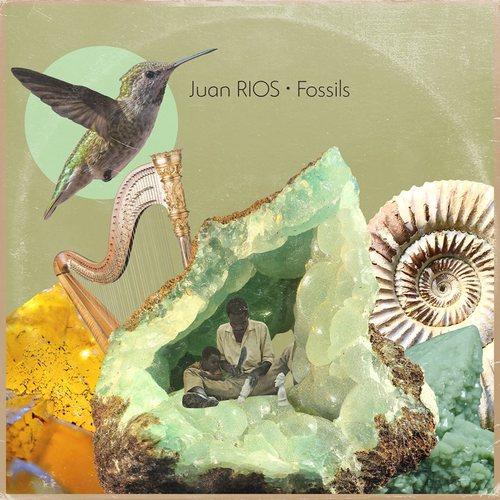 Medium_fossils